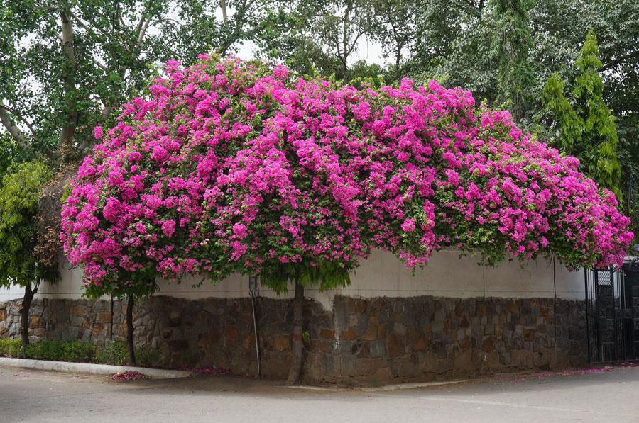 Delhi flowers
