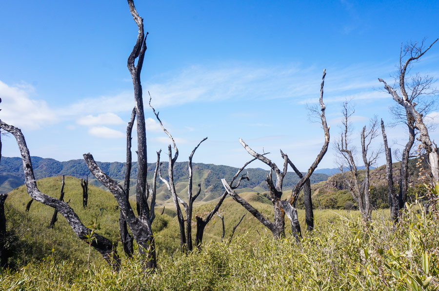 Dzukou Valley Trees