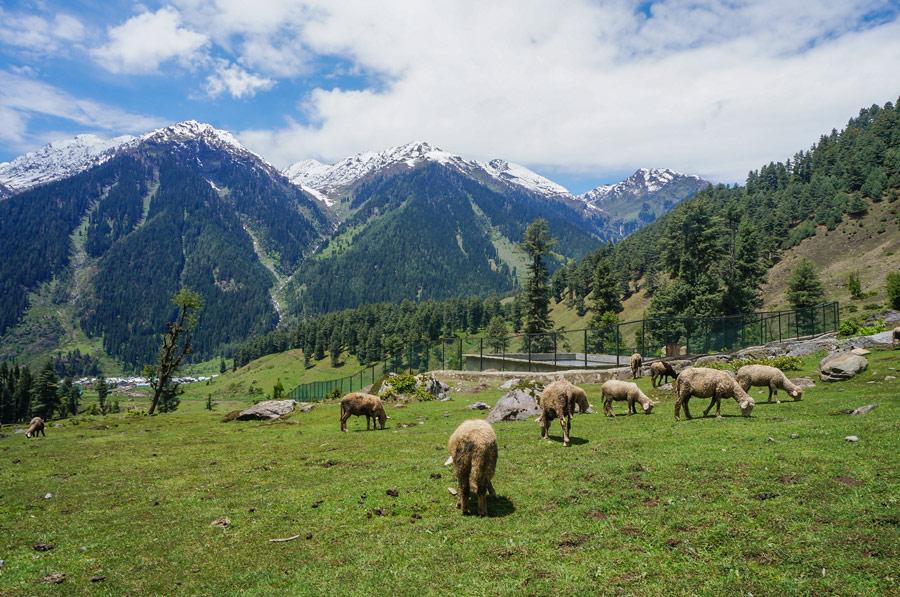 Aru valley nature