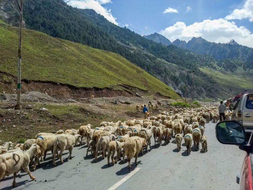 Srinagar Sonamarg road