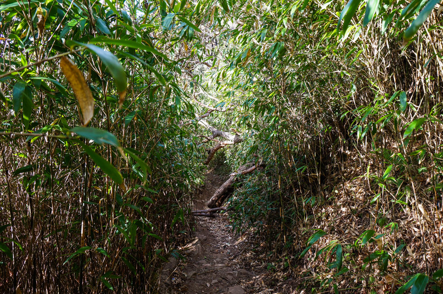 Dzukou jungle trail